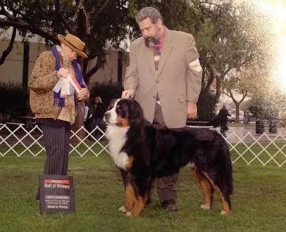 Vonzurich Bernese Mountain Dogs San Francisco Ca 94133
